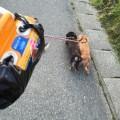 犬散歩のアイテム